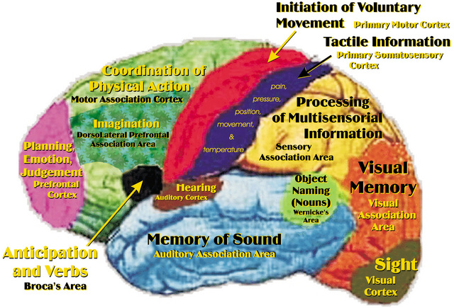 Brain map project set to revolutionise neuroscience  no doubt