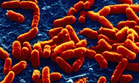 Escherichiacolibacteria