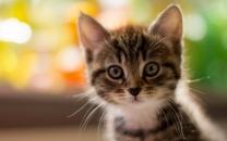 pretty-kitty