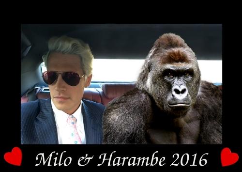 milo&harambe2016