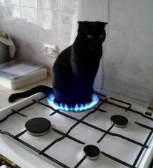 catfirestove