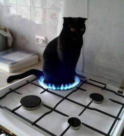 catfirestove